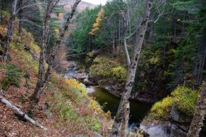 White Mountains  Fall Foliage  254 by FairieGoodMother