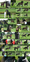 The Friesian show by Jullelin
