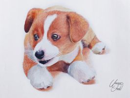 Drawing Animals 2 - A Puppy by f-a-d-i-l