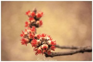 - New Life in Spring - by kissesfrom
