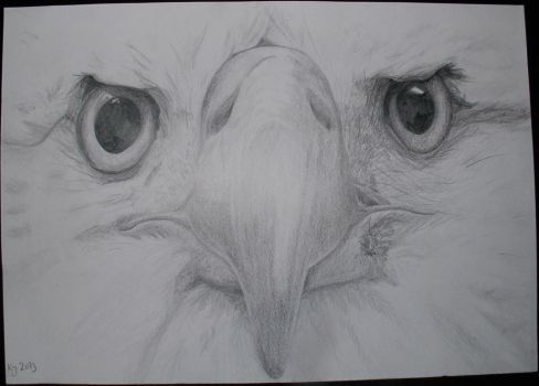 Eagle's face by KiraChan55555