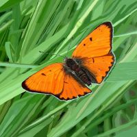 Orange Butterfly by Patternintheivy