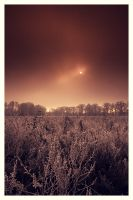 winter colors II by mightyflup