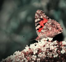 .:.One more butterfly.:. by Ailedda