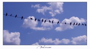 Birds on a wire by underdogg101