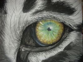 the eye of the tiger by shintla
