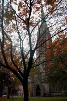 church tree by lullabymydreams