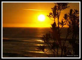 Banksia Sunrise 2 by FireflyPhotosAust