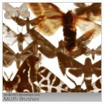 Moth Brushes by Scully7491