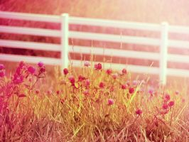 A Country Summer by Morna
