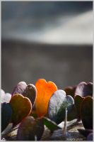 Heart Cactus by Mokarta-Photo