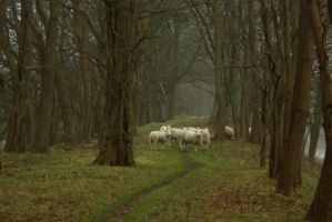 Sheep on the dike 1 by steppelandstock