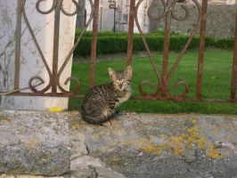 Cat in the Street by sara1elo
