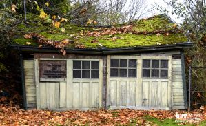 Old Mossy shed by RoadKillConcepts