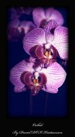 orchid1 by dok0001