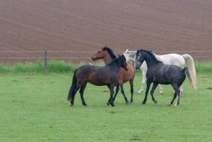 Horses Playing on Pasture by LuDa-Stock