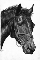 Eventer Commission by Scotston