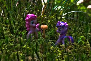 The Everfree Forest II. by ArrowUnicorn