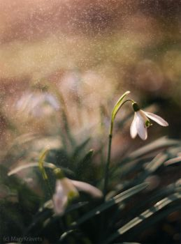spring by marykravets