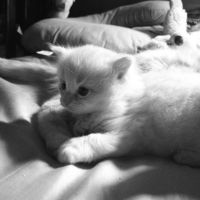 Falkore the Luck Kitten by BethaneyRENFIELD