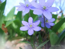 March Flowers 10 by love1008