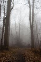 Fog on the path. by Costumy