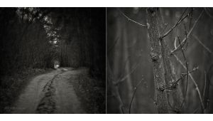 in the forest by fili
