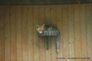 a redfox on the wall by KIARAsART