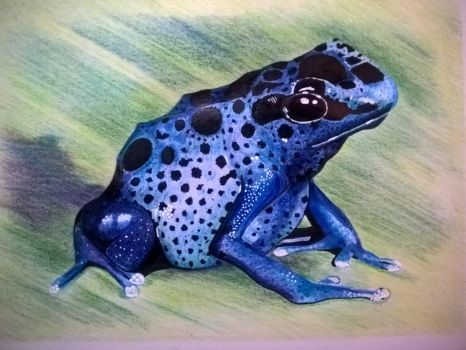 Frog Blue Arrow Draw by riberma