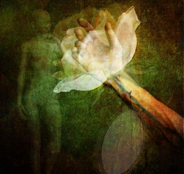 To feed the rose by musetta30