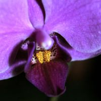 For You by deftones1979