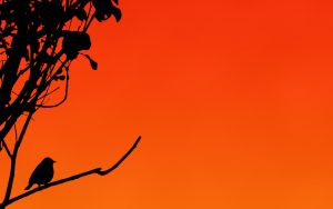 Silhouetted Sparrow Wallpaper by Kem2000