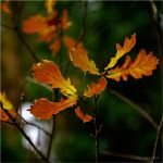 Autumn ..24.. by my-shots