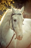 White Horse by clementmarti