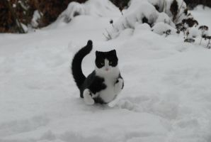 Snowcat for the win by RichaCavaille
