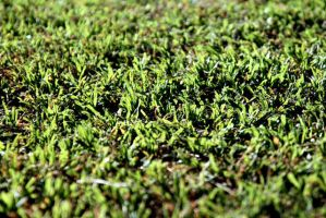 element grass by eEl886