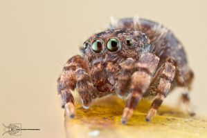 Jumper by ColinHuttonPhoto