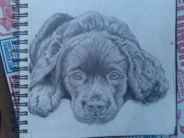 Puppy Complete by theisnoworld