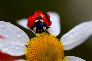 Lady resting on daisy by lilfrogs