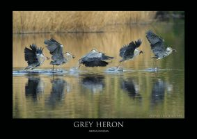 Heronry.3 by THEDOC4