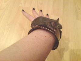 Taxidermy Mouse bracelet by amandas-autopsies