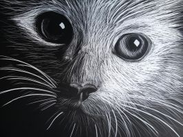 Scratchboard Meow by Am8er
