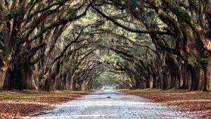 Wormsloe Plantation in Savannah, Georgia_5 by PhotoshopGirl29