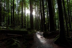 Wallace Falls State Park 4 by krovakny
