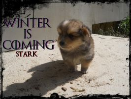 The winter is coming, please take me home by Pelezinjo84