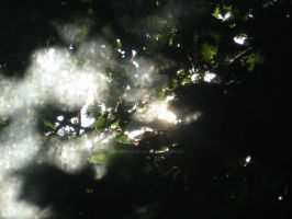 Shining Through the Branches by sunrise-in-silver