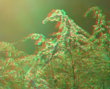Autumn 10 3D Anaglyph by yellowishhaze