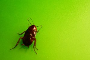 Green and bug by unbornagain