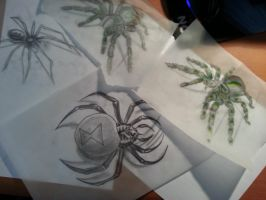 Realistic spider tattoo sketches by flaviudraghis