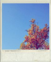 Autumn Melody by OVEclipse